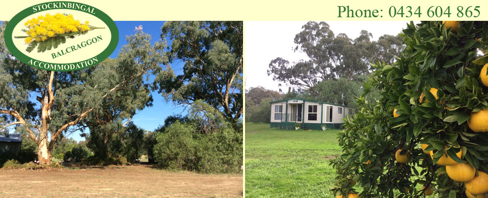 Shady 80 year old yellow box gums - Nestled beside established eucalypts with grapefruit ready to pick